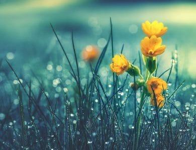 Özel Tasarımlı Çiçekler